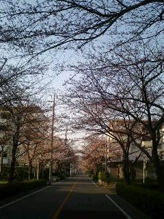 桜がさいた