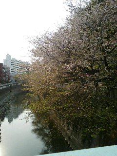 花見実況中継(文京区)2