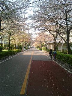 桜は散りました