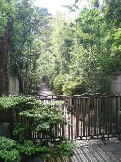 世田谷の庭
