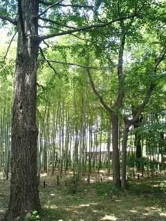 芦花公園に行きました