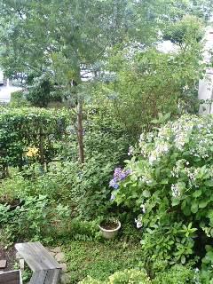 今朝の我が家の庭の草木