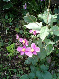 我が家の庭に秋が来た