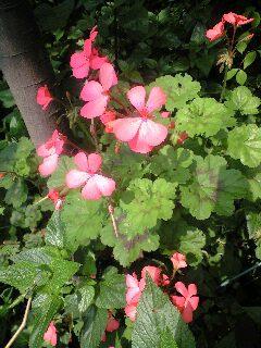今朝の庭2