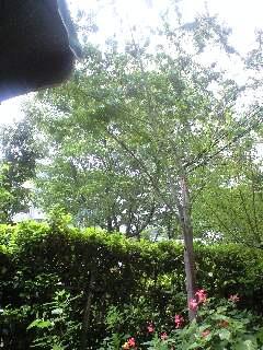 今朝の庭3