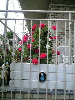 見かけた花たち