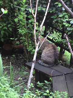梅雨の庭2