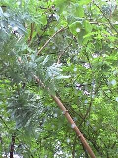 梅雨の庭1