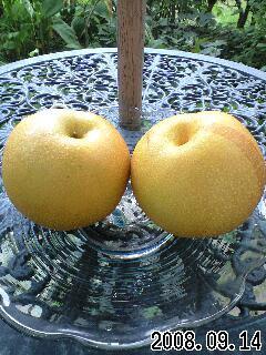 梨が届いた