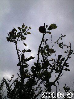 秋の景色のスナップ