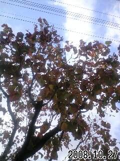 秋のスナップ3