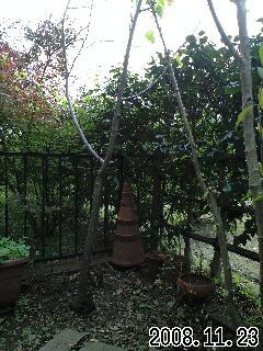 11月の我が家の庭1