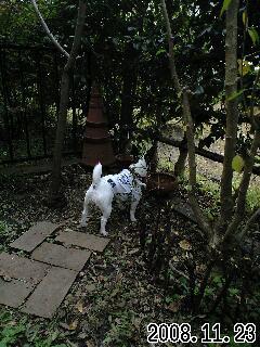 11月の我が家の庭2