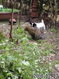 今日の我が家の庭