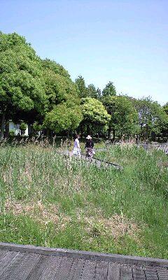 小沢辞任に思う(みさと公園)