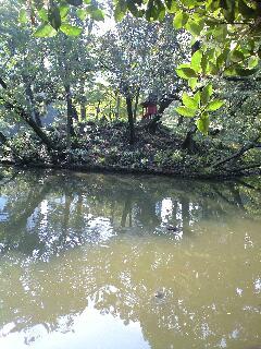 小石川後楽園の秋3