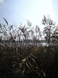 手賀沼の秋