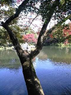 秋の小石川後楽園スナップ
