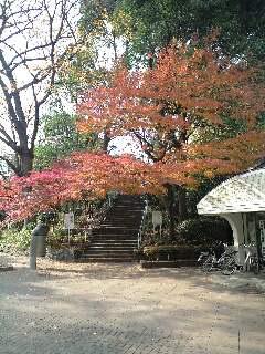 上野の森の秋