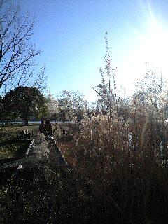 みさと公園1
