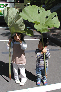 Akitabuki03