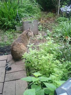 今朝の庭のタビサです。