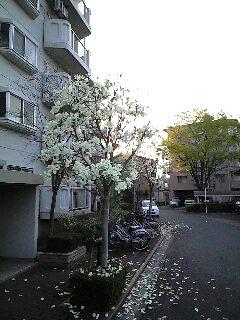 ご近所の風景です