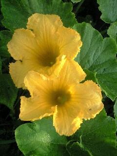 由布市庄内の花