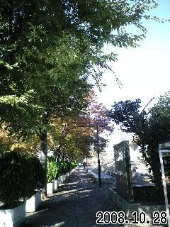 秋のスナップ2
