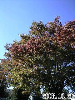 秋のスナップ1