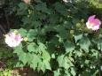 7f48b1ef43d140e7b47e69a16dd6eacf